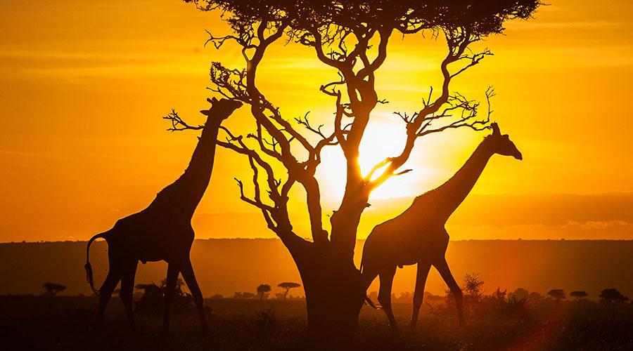 区块链技术扎根肯尼亚